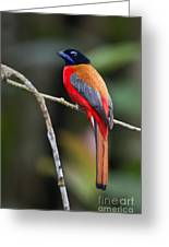 Bornean Beauty Greeting Card