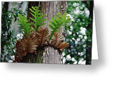 Borneo Fern A Primitve Ant Plant Greeting Card