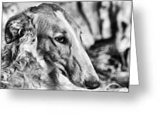 Borzoi Dog Portrait Greeting Card by Christian Lagereek