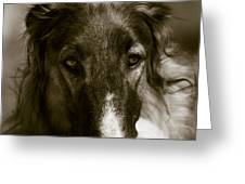 Borzoi Hound Portrait Greeting Card by Christian Lagereek