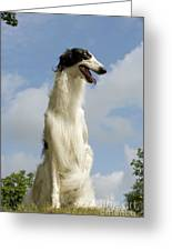 Borzoi Or Russian Wolfhound Greeting Card