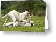 Borzoi Puppies Playing Greeting Card