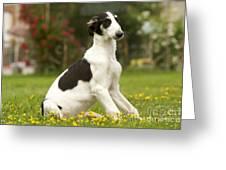 Borzoi Puppy Greeting Card
