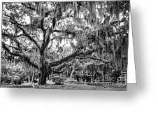 Bosque Bello Oak Greeting Card