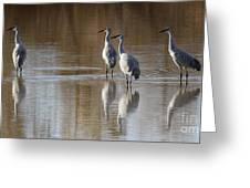 Bosque Del Apache Cranes Greeting Card