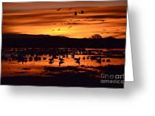 Bosque Del Apache Sunrise 1 Greeting Card