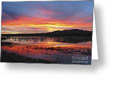 Bosque Sunset I Greeting Card