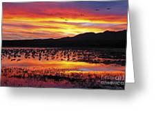 Bosque Sunset II Greeting Card