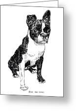 Boston Bull Terrier Greeting Card