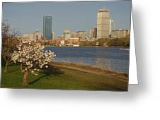 Boston Charles River On A Spring Day Greeting Card
