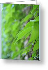 Boston Ivy Bokeh Greeting Card