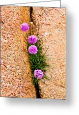 Botanica Series - Flowers In The Crack Greeting Card