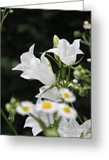 Botanical Beauty In White Greeting Card