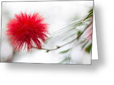 Botanical Conservatory 6 Greeting Card