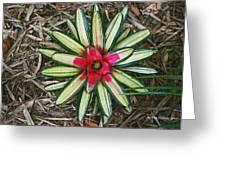 Botanical Flower Greeting Card