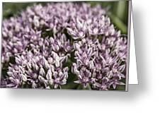 Botanical Stars Greeting Card