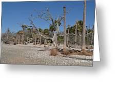 Botany Beach Greeting Card