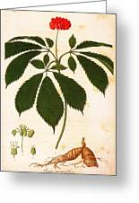Botany: Ginseng Greeting Card