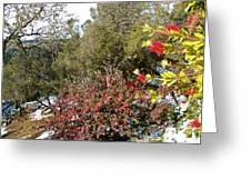 Bottlebrush In Sierra Nevada Foothills In Winter In Park Sierra-ca Greeting Card