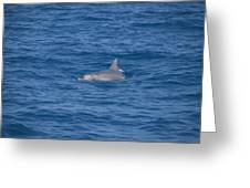 Bottlenose Dolphin Greeting Card