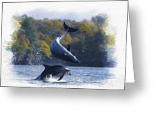Bottleneck Dolphin Playing Greeting Card