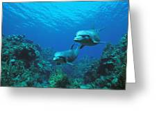 Bottlenose Dolphins Over Reef Greeting Card