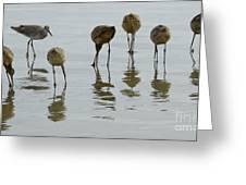 Shorebirds 1 Greeting Card