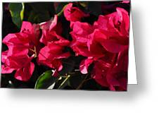 Bougainvillea Greeting Card