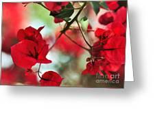 Bougainvillea Beauty Greeting Card
