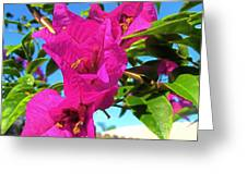 Bougainvillea Beauty Greeting Card