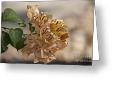 Bougainvillea Flowers  Greeting Card