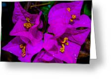 Bougainvillea Matte Touch Greeting Card