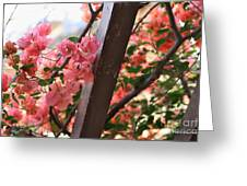 Bougainvillea On Trellis Greeting Card