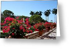 Bougainvillea Row Greeting Card