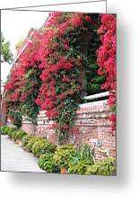 Bougainvillea Wall In San Francisco Greeting Card