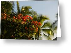 Bougainvilleas And Palm Trees Swaying In The Wind In Waikiki Honolulu Hawaii Greeting Card