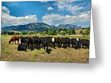 Boulder Beef Greeting Card