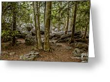 Boulder Woods Greeting Card