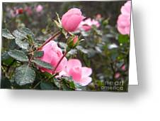 Bound With Love Greeting Card