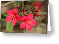 Boundless Beauty Greeting Card