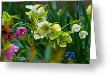 Bouquet Of Lenten Roses Greeting Card