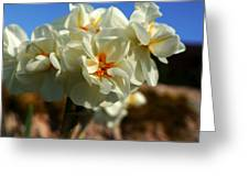 Bouquet Of Narcissus Greeting Card