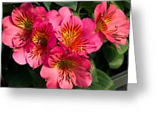 Bouquet Of Pink Lily Flowers Greeting Card