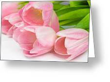 Bouquet Of Pink Tulips. Greeting Card