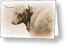 Bovine With Bangs Greeting Card