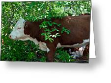 Bovine In The Shade Greeting Card