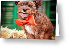 Bow Tie Bandit Greeting Card