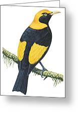 Bowerbird  Greeting Card