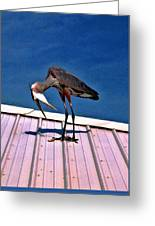 Bowing Blue Heron Greeting Card