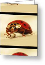 Bowing Ladybug . Art And Frame Print Only Greeting Card